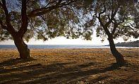 Due alberi in riva al mare proiettano la loro ombra sulla spiaggia